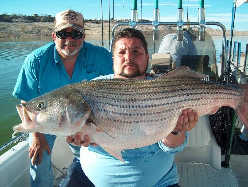 Elephant butte fishing trips land of enchantment fishing for Striper fish pictures